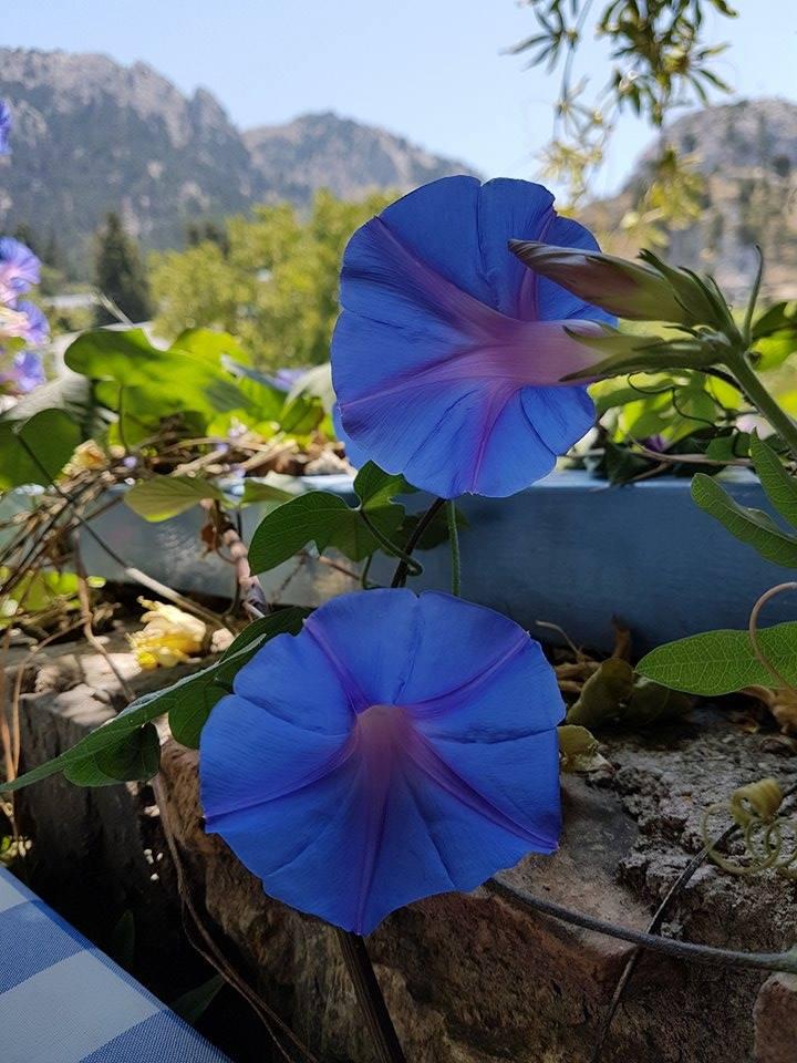 Flower Koz
